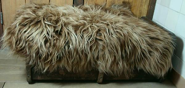 IJslandse schapenvacht<br />geverfd